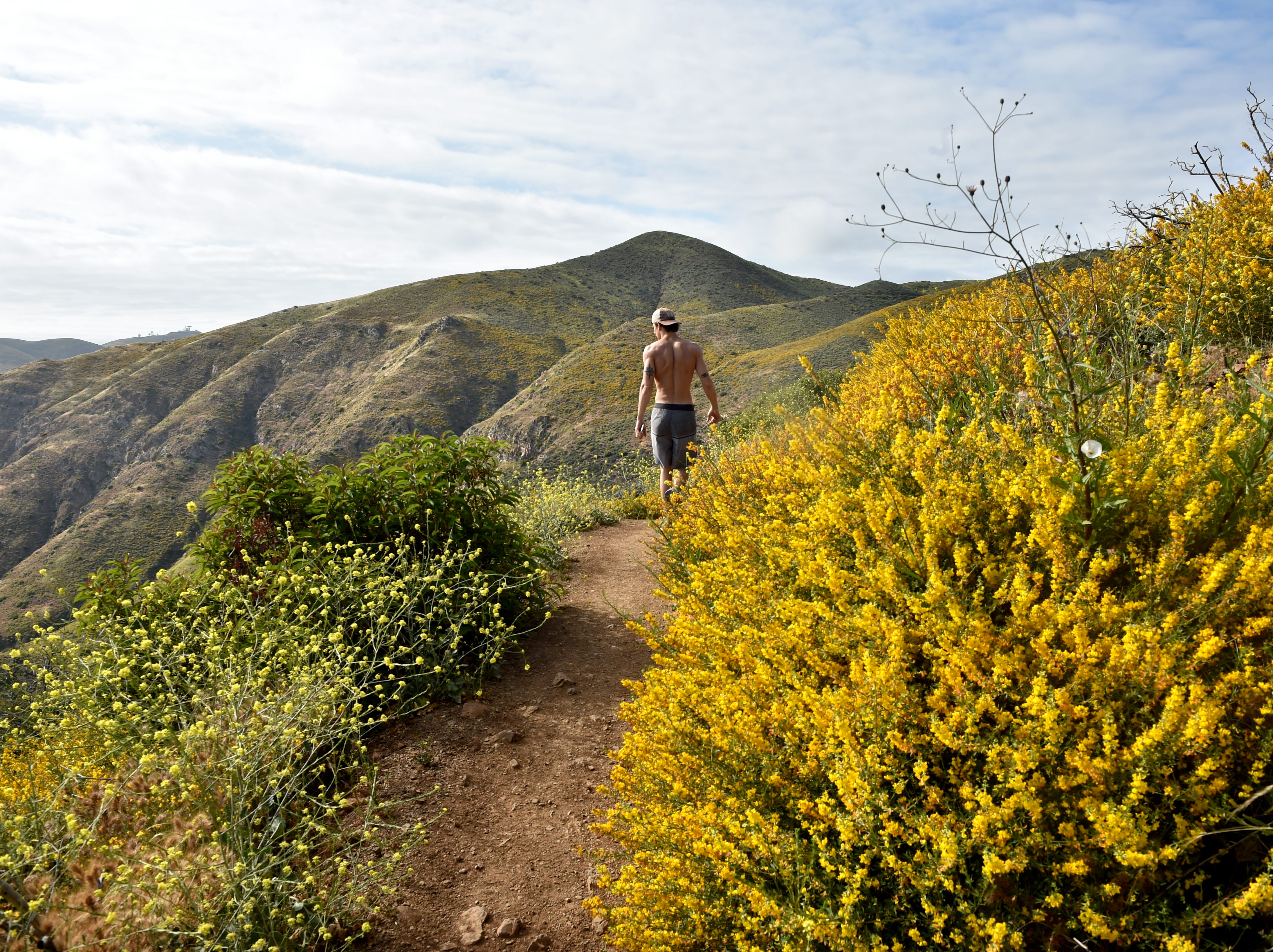 Kyle Scheer, 22, of Oxnard, looks out over the Ray Miller Trail in the Santa Monica Mountains, where native grasses, black mustard and wildflowers have grown thick after a wet winter. The vegetation bloom could pose challenges for firefighting agencies as summer approaches, leaving an abundance of dry fuel for wildfires.