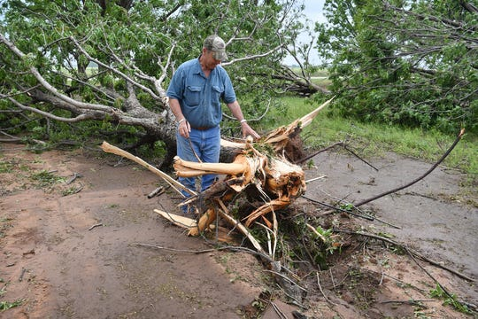 Tim Montz of Montz Home Orchard assesses the damage to one of about 500 mature pecan trees that were destroyed by a tornado that hit Charlie, Texas Tuesday evening.