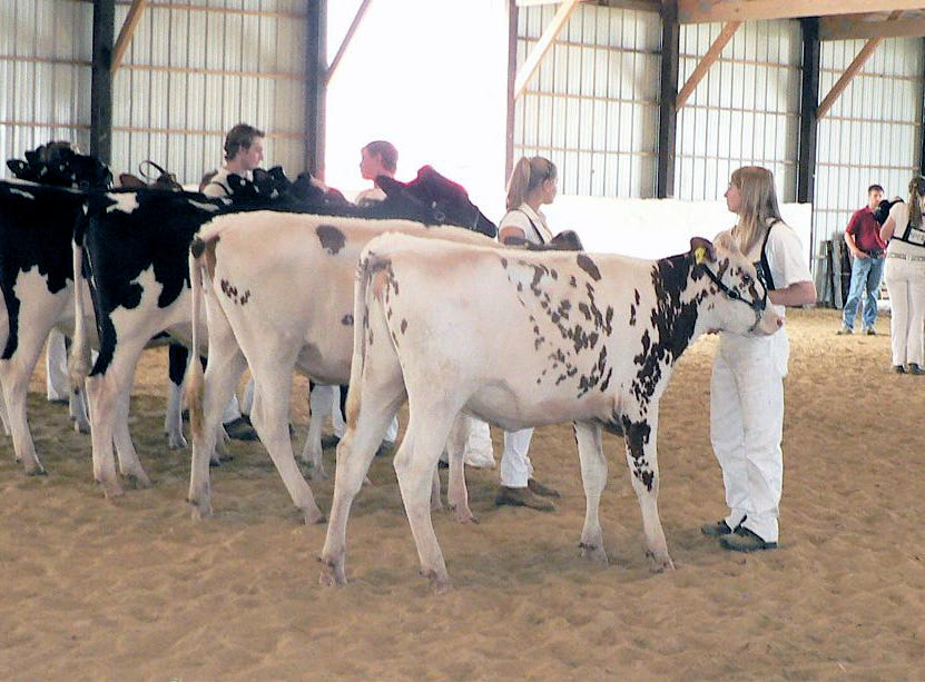The Stoughton Fair is the start of their showing career for many.