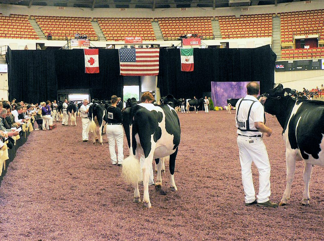 To show at Dairy Expo is the goal of many.