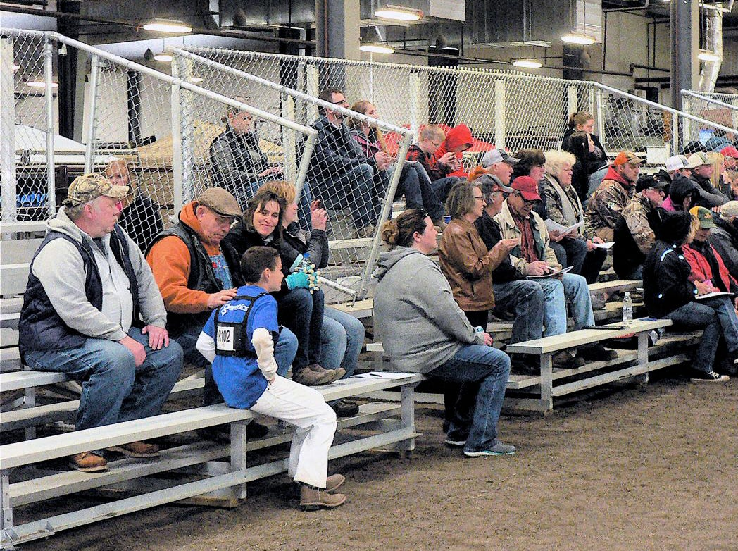 Spectators watch different things: cattle they might know; the judging; their sons, daughters or relation who are exhibiting.