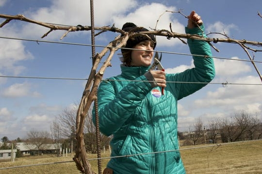 Amaya Atucha, University of Wisconsin–Madison Division of Extension fruit specialist, testing a pruning technique for wine grapes at West Madison Agricultural Research Station in Madison.
