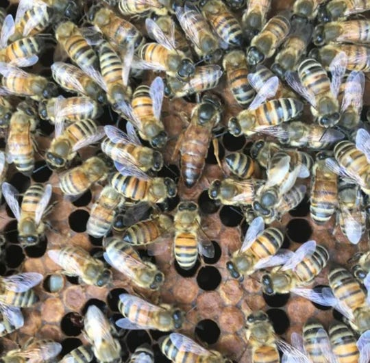 Jerry Gibbs raises bees near his home in Fishers, Ind.