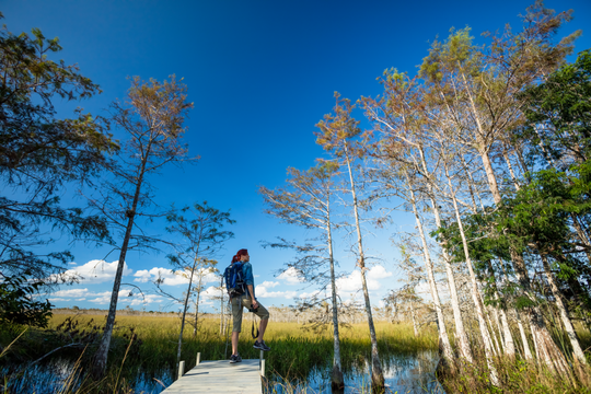 Get in touch with nature in Everglades City.