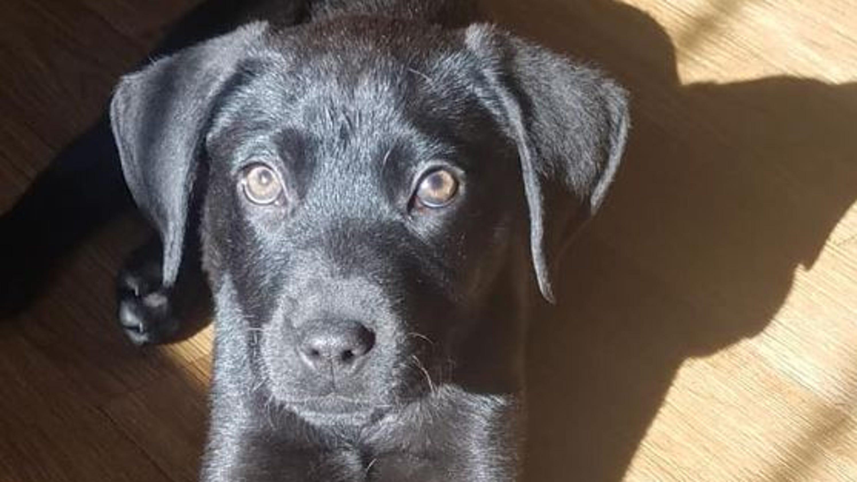 Deaf man Nick Abbott adopts deaf dog, teaches him sign language