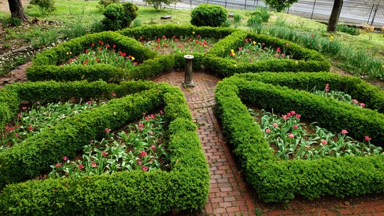 Edith Henderson designed this hedge garden for the Craighead-Jackson House adjacent to Blount Mansion. Staci Catron knew Henderson, who lived from 1911 to 2005, and is the curator of her papers. April 9, 2019.