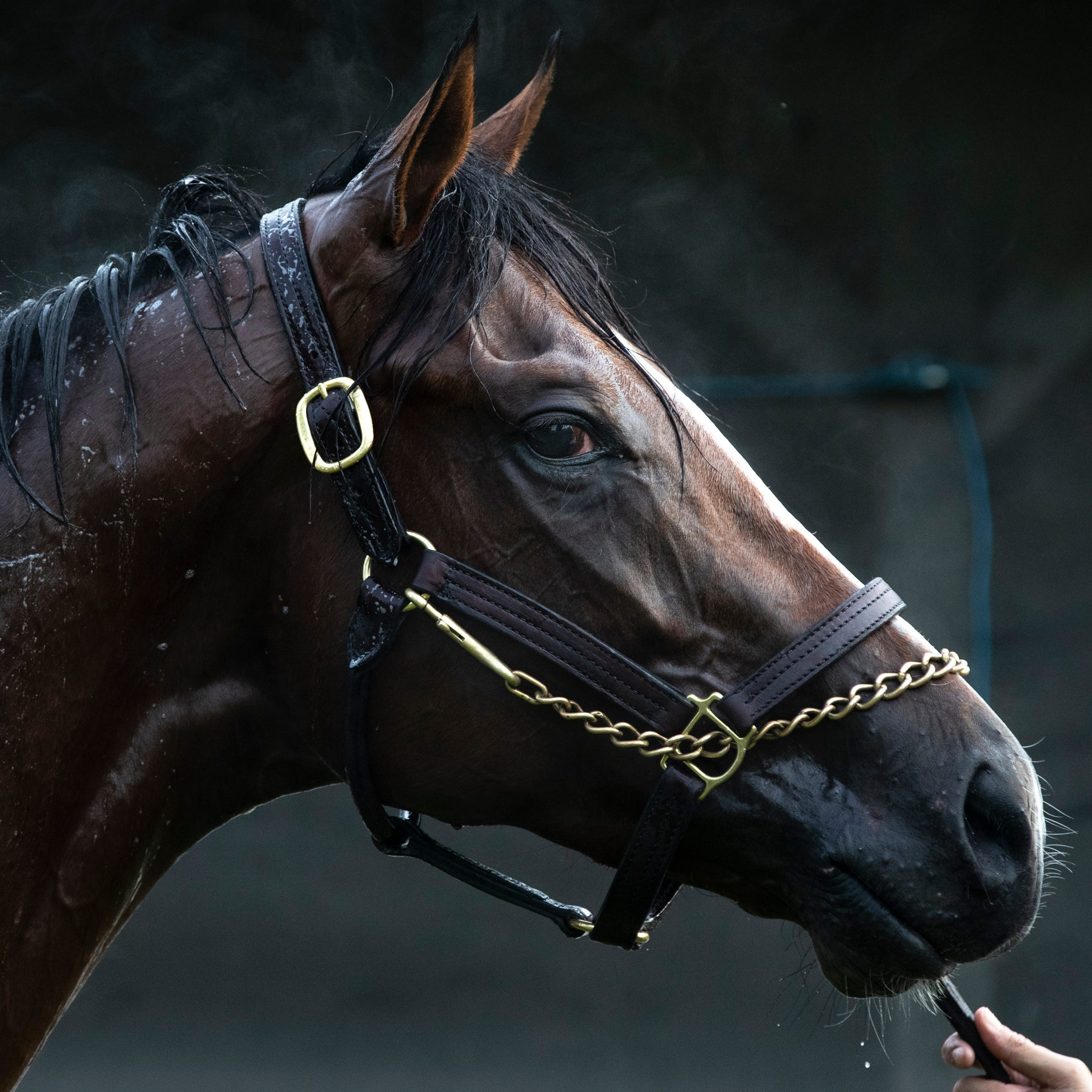 Free Brisnet past performances for 2019 Preakness Stakes contenders