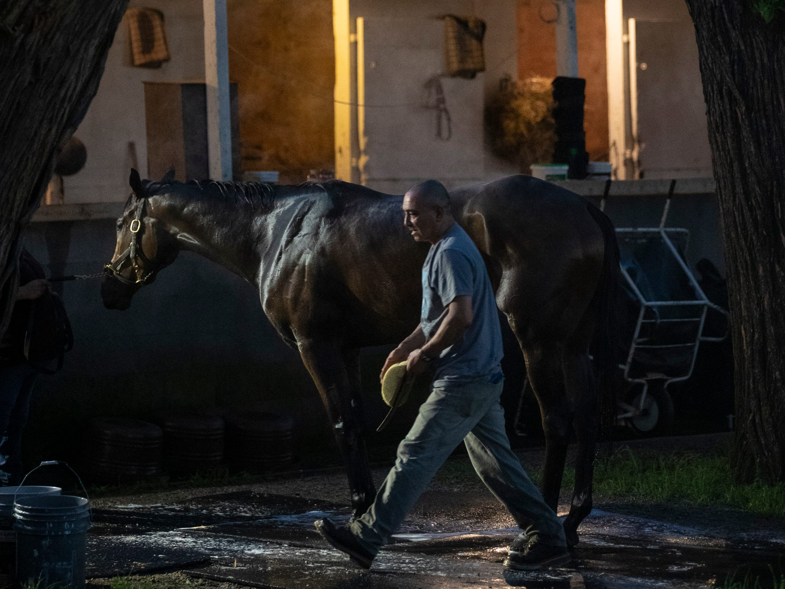 A horse is bathed before dawn on the backside of Churchill Downs. May 2, 2019.