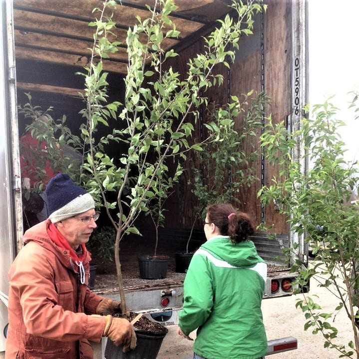 Two significant tree-planting efforts happening in Manitowoc area this spring