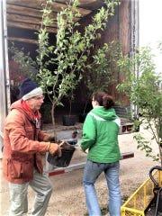 Volunteer Dr. Don DeBruyn and Jeni Klein, Woodland Dunes land manager, unload trees for planting.