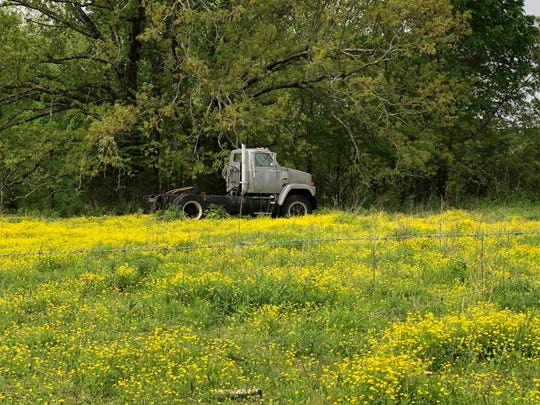 Yellow flowers paint the landscape along windy roads in Westmoreland.