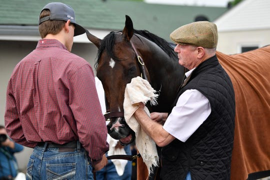 Trainer Richard Mandella dries the nose of Omaha Beach after workouts at Churchill Downs on Tuesday.