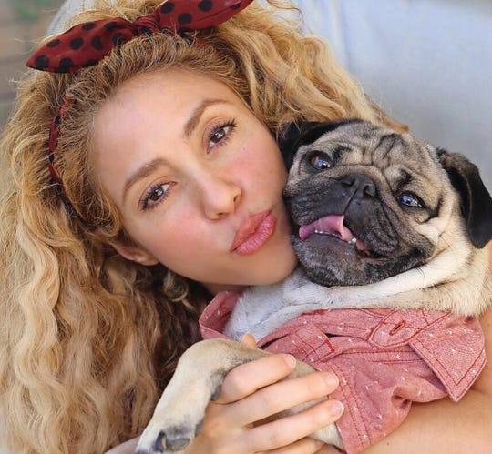 Doug the Pug and singer Shakira