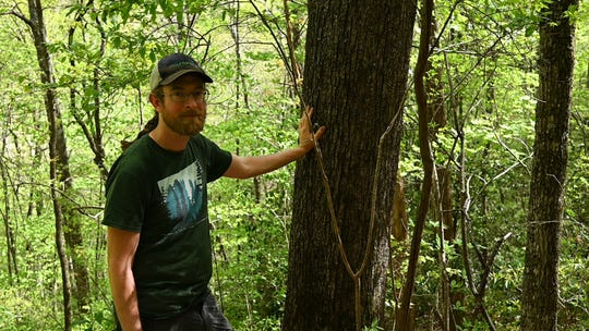 Josh Kelly, public lands biologist with MountainTrue, stands next to a a 231-year-old white oak proposed for logging in Stand 108-23 in the Chunky Gal Potential Wilderness Addition in the Buck Project Area in Pisgah National Forest.