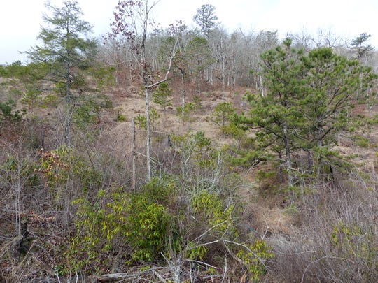 The Buck Creek Serpentine Barrens is a rare plant community found in the Nantahala National Forest. It is being encroached by woody vegetation and is one project slated for improvement in the Buck Project proposal.