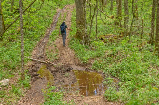 "Josh Kelly with MountainTrue walks along an unofficial road May 2, 2019, that is proposed to become a ""temporary road"" in the Buck Project timber sale."