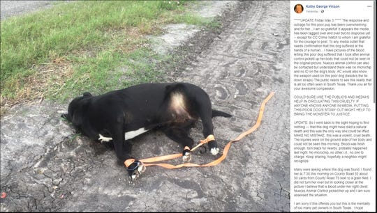 Facebook user Kathy Vinson posted a photo of a dog that appears to have its legs bound with an orange strap. Nueces County Animal Control officials said no cruelty is suspected. It appears someone used the strap to lift  the dog and dump it.
