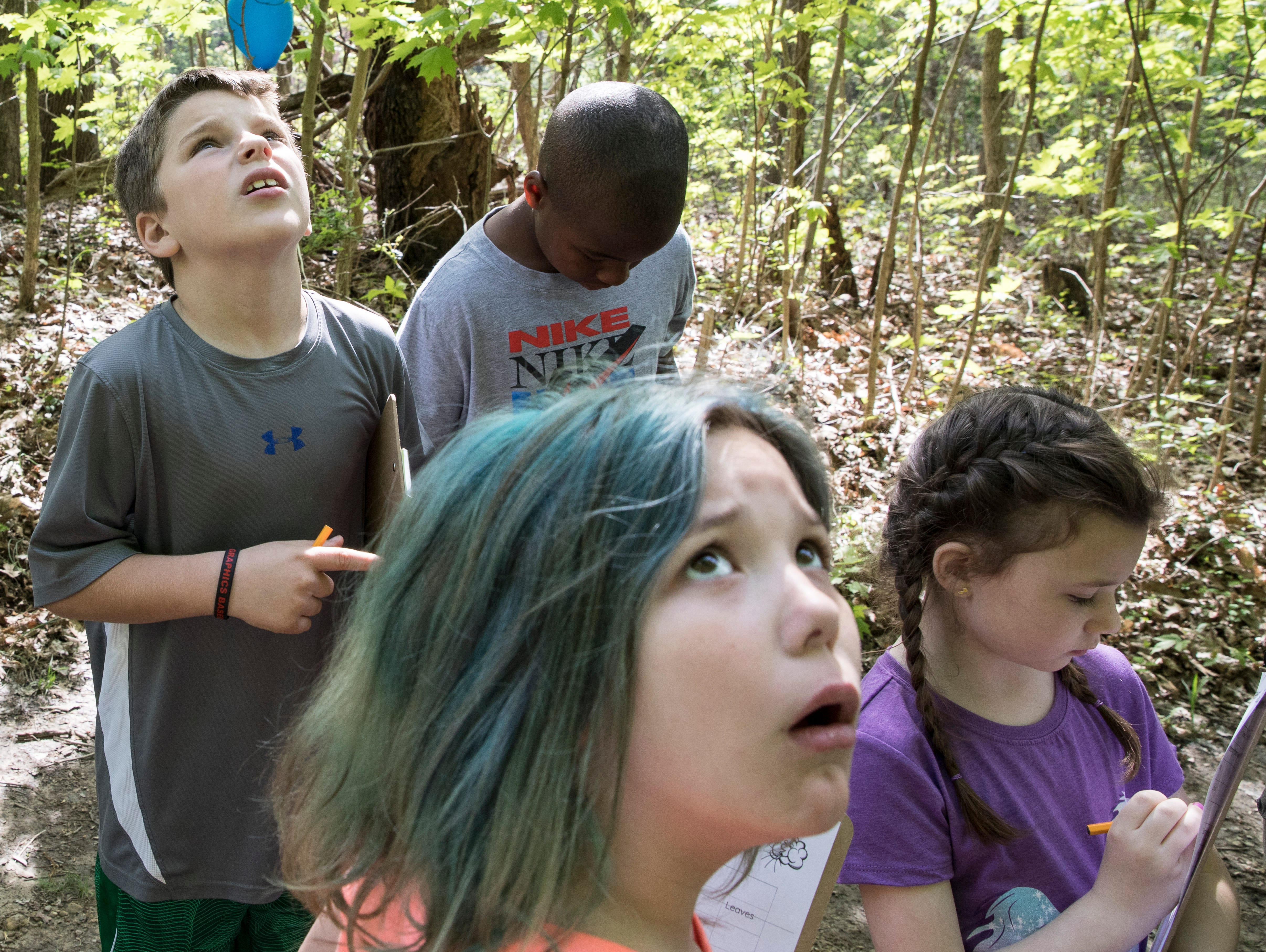 Along with his fellow classmates, Chillicothe Primary student Kaden Steele looks at his surroundings as they discover how heavily wooded areas affect the wind and its strength on the environment as part of a STEM learning project during a school outing at Buzzards Roost Nature Preserve on Wednesday, May 1, 2019.