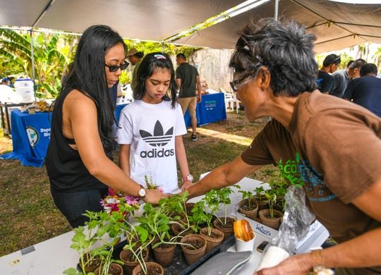 The Department of Agriculture hosted its annual May Harvest Festival in Mangilao on May 3, 2019. The Field to Fork Cook-Off competition, featuring dishes prepared with meat from feral pig hunts, was also held during the event.