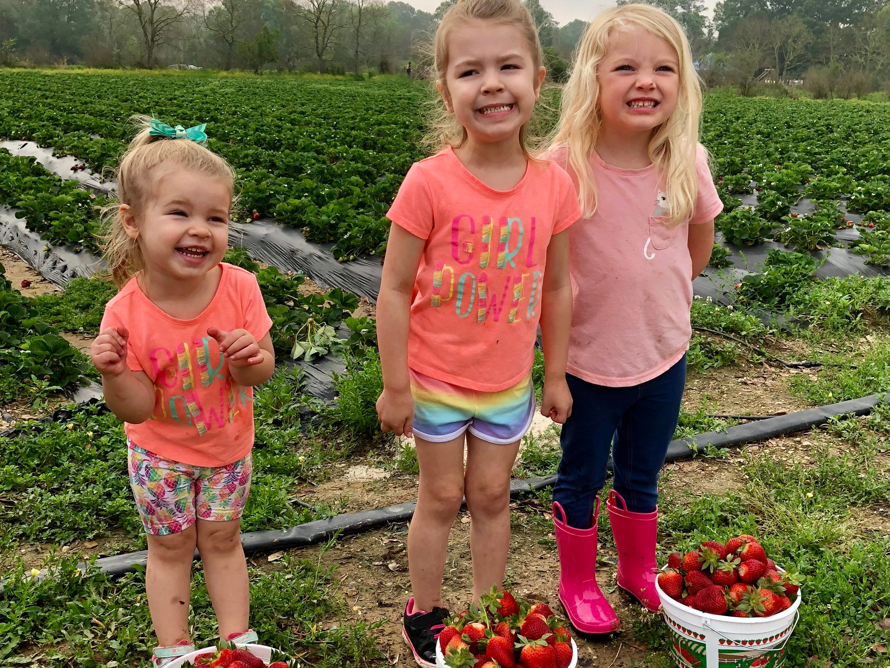 Cousins Marie and Avery Guidry and Claire Ivy smile proudly with their loads of picked strawberries April 6  at Mrs. Heather's Strawberry Farm in Albany, Louisiana.