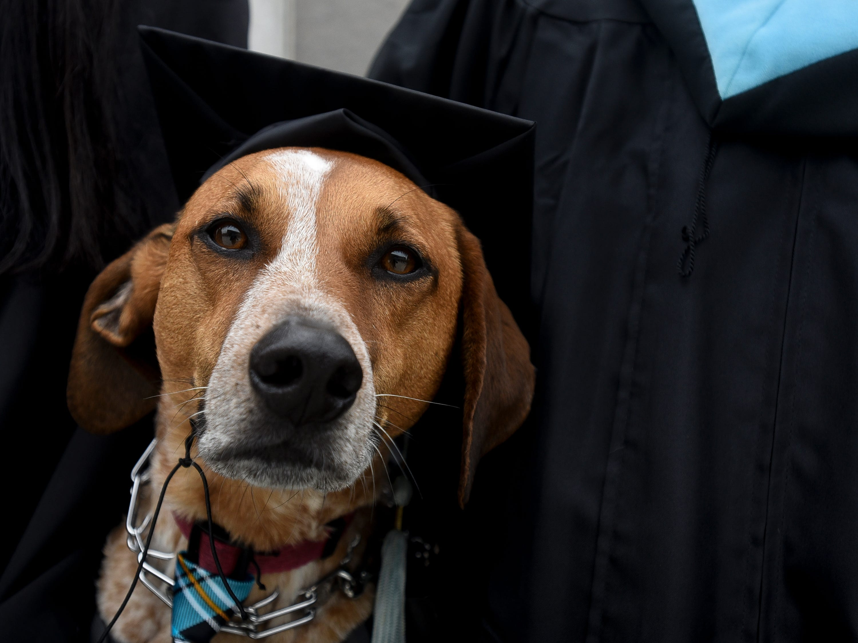 """Caitlin Thompson and her and service dog """"Charlie,"""" pictured Friday, May 3, 2019, outside of the Breslin Center in East Lansing prior to commencement.  Thompson graduated with a Master's in Rehabiliative Counsing from the College of Education."""