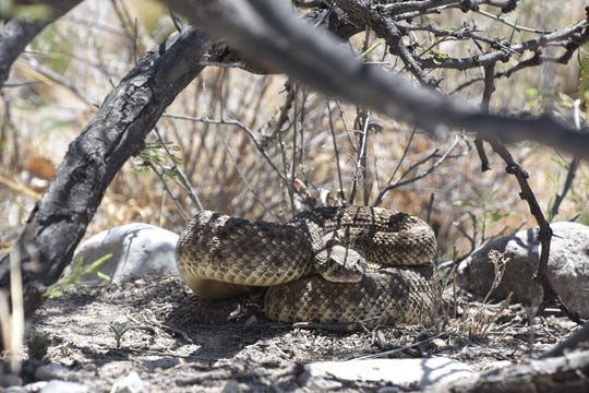A Las Cruces man was bitten by a snake Wednesday evening as he was doing yard work.
