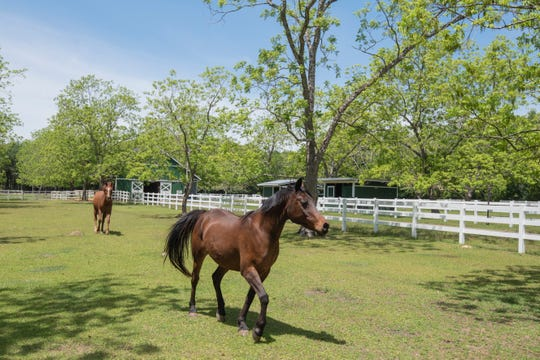 The fenced pastures are excellent for horses.