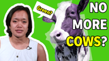 President Trump has said that the progressive initiative called the Green New Deal will eliminate cars, air travel and ... cows. Is he correct?