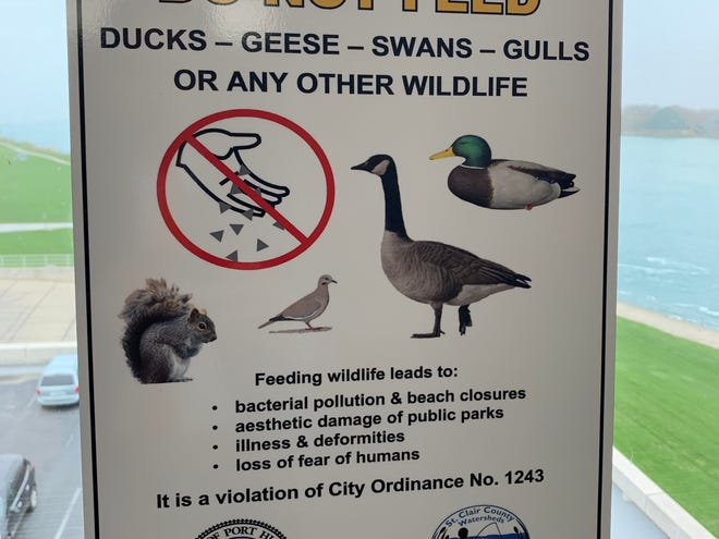 "The city plans to deploy ""do not feed"" signs along parts of its waterway to discourage residents and visitors from feeding geese — with hopes it takes care of another geese problem."
