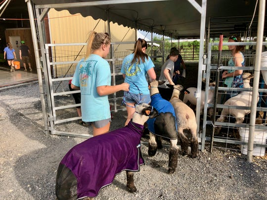 Jordan Strickler leads her sheep to the washing station on Wednesday evening in preparation for the 74th annual Market Animal Show and Sale.