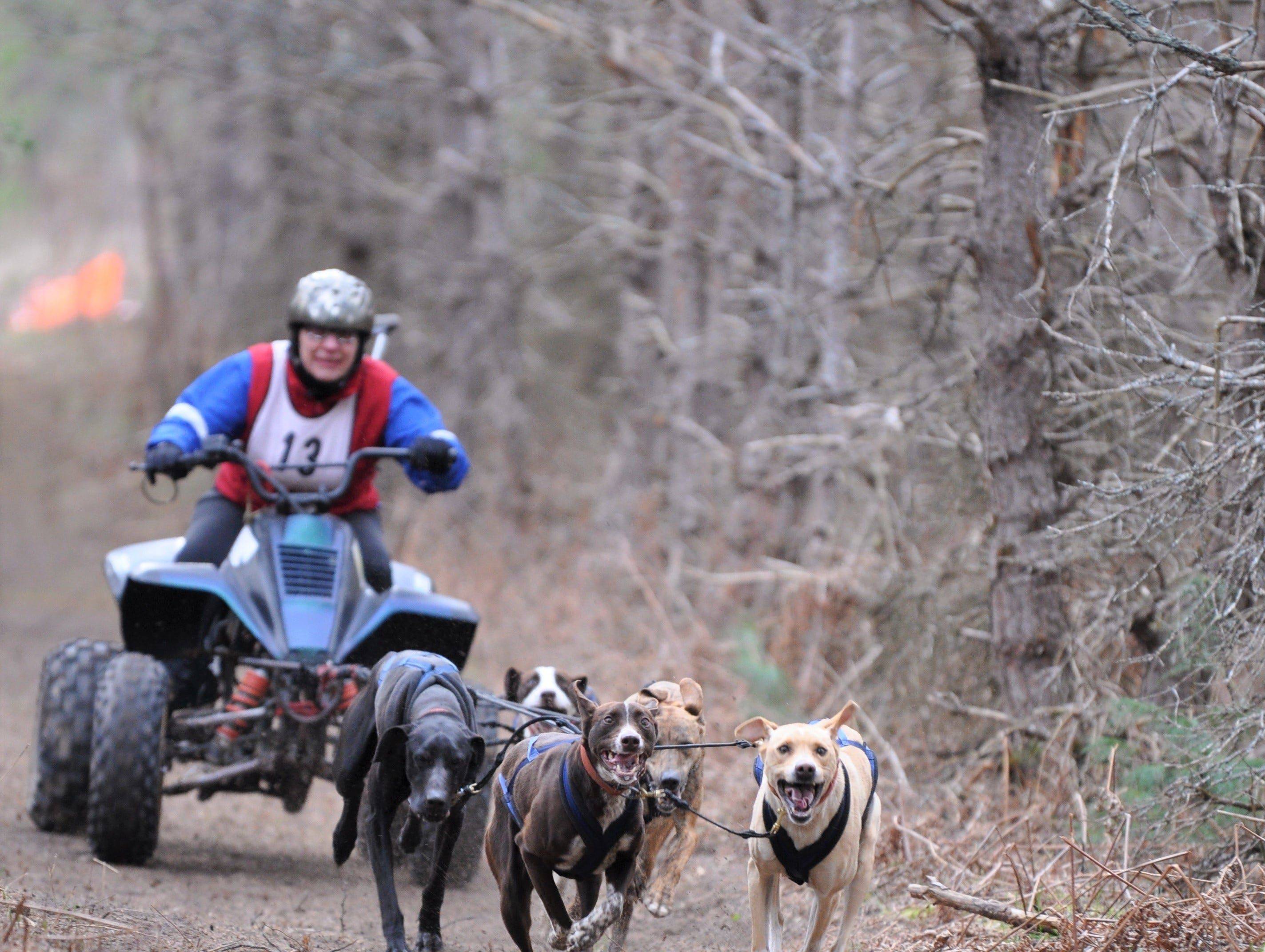 Wausau's champion dog musher stages comeback after horrific crash and injuries