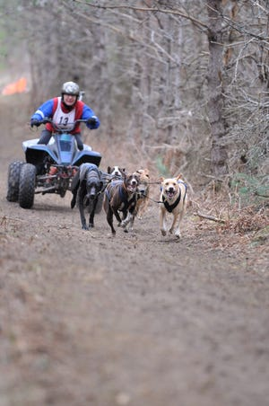 Jan Bootz-Dittmar competed on April 27 and 28 at the Troutfest Dryland Dog Derby, held in Mancelona, Michigan. It was her first competition since she broke her thighbone, kneecap and collarbone in early November.