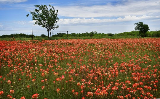 Above average rainfall has area lakes flowing over spillways and roadside wildflowers creating large swaths of color in many locations.