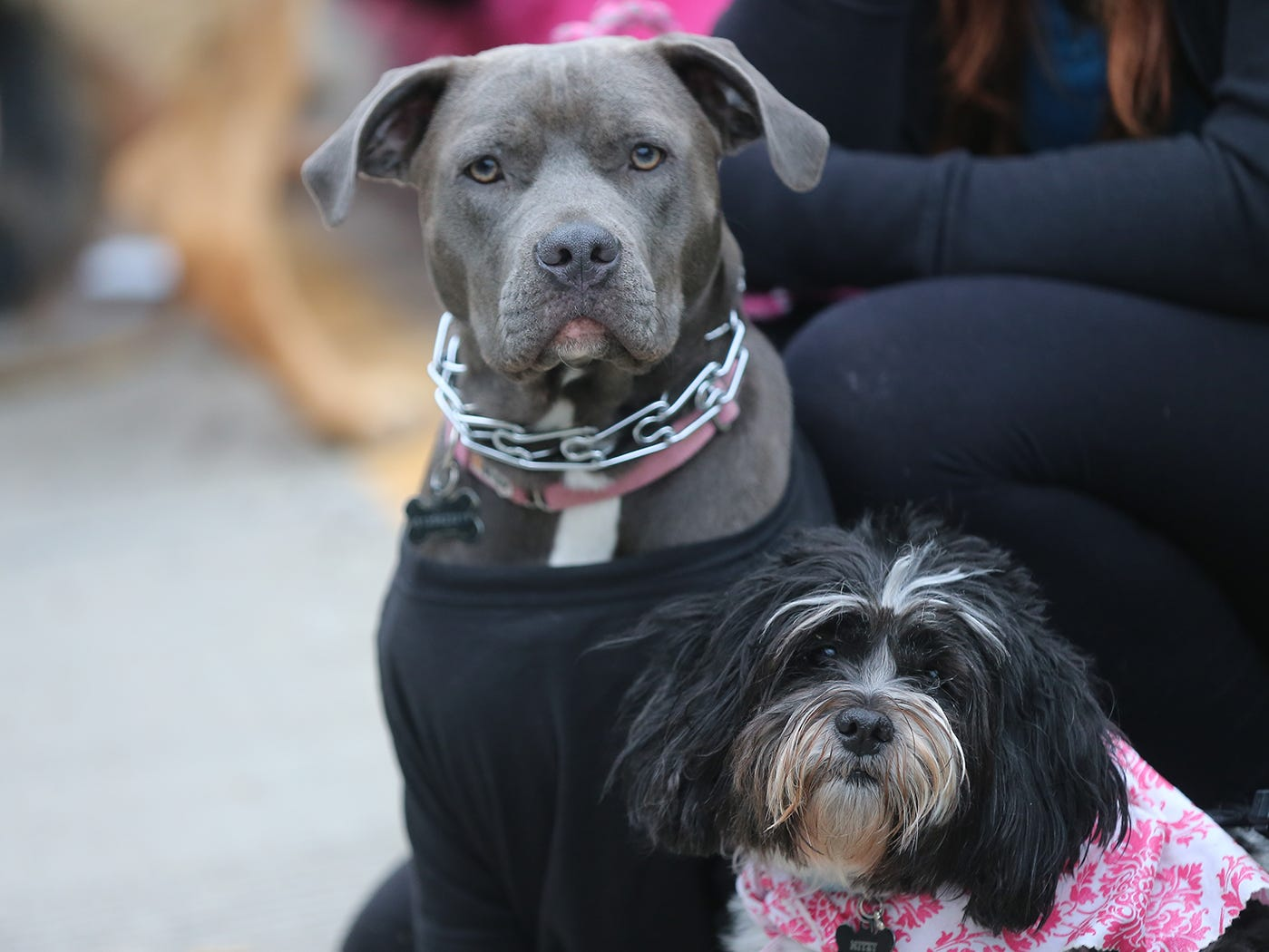 Bailely and Misty at the Flying Fur race, Downtown Cincinnati Saturday , May 4,2019.