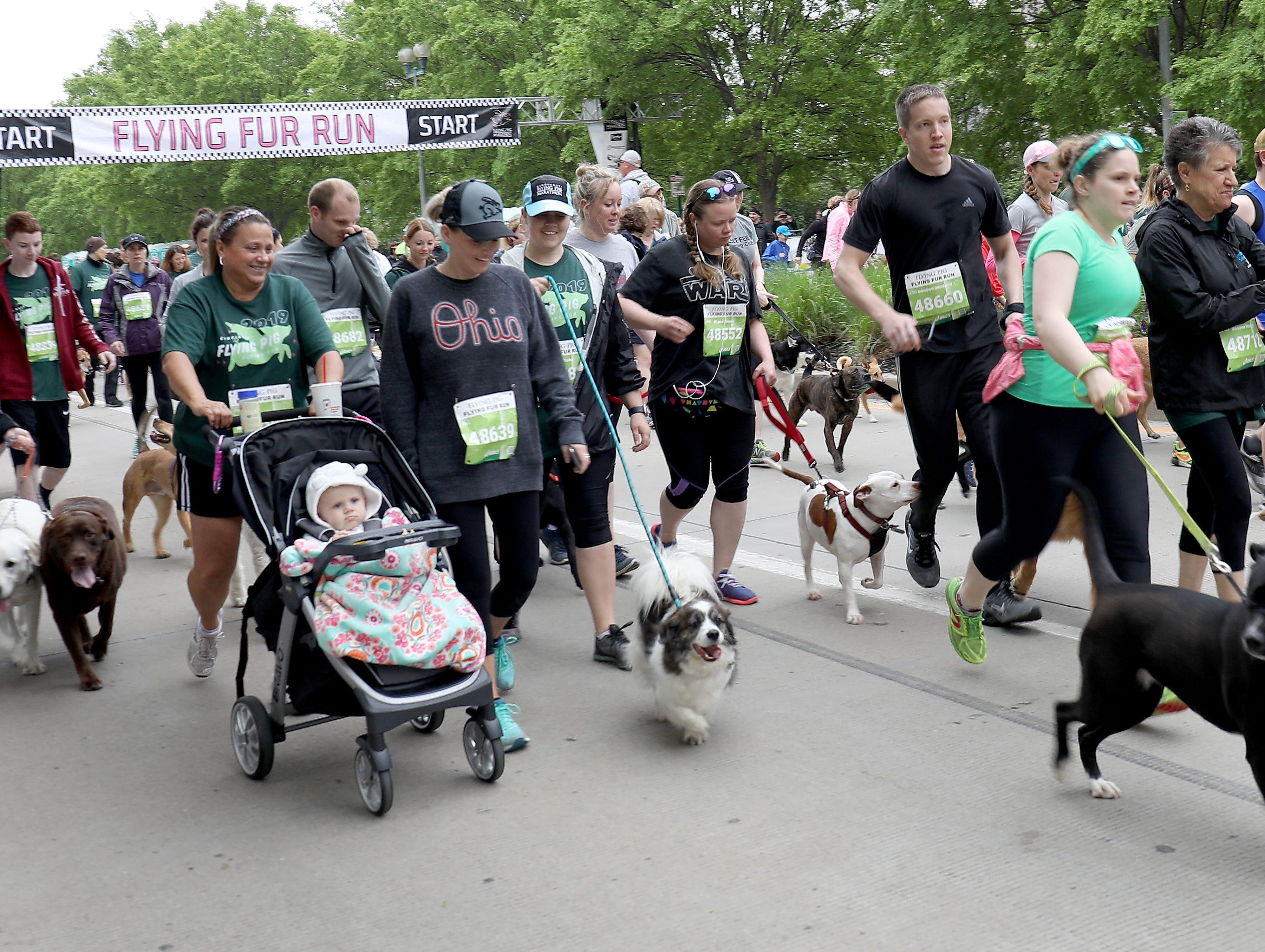 The begging of the Flying Fur race, Downtown Cincinnati, Saturday , May 4,2019.