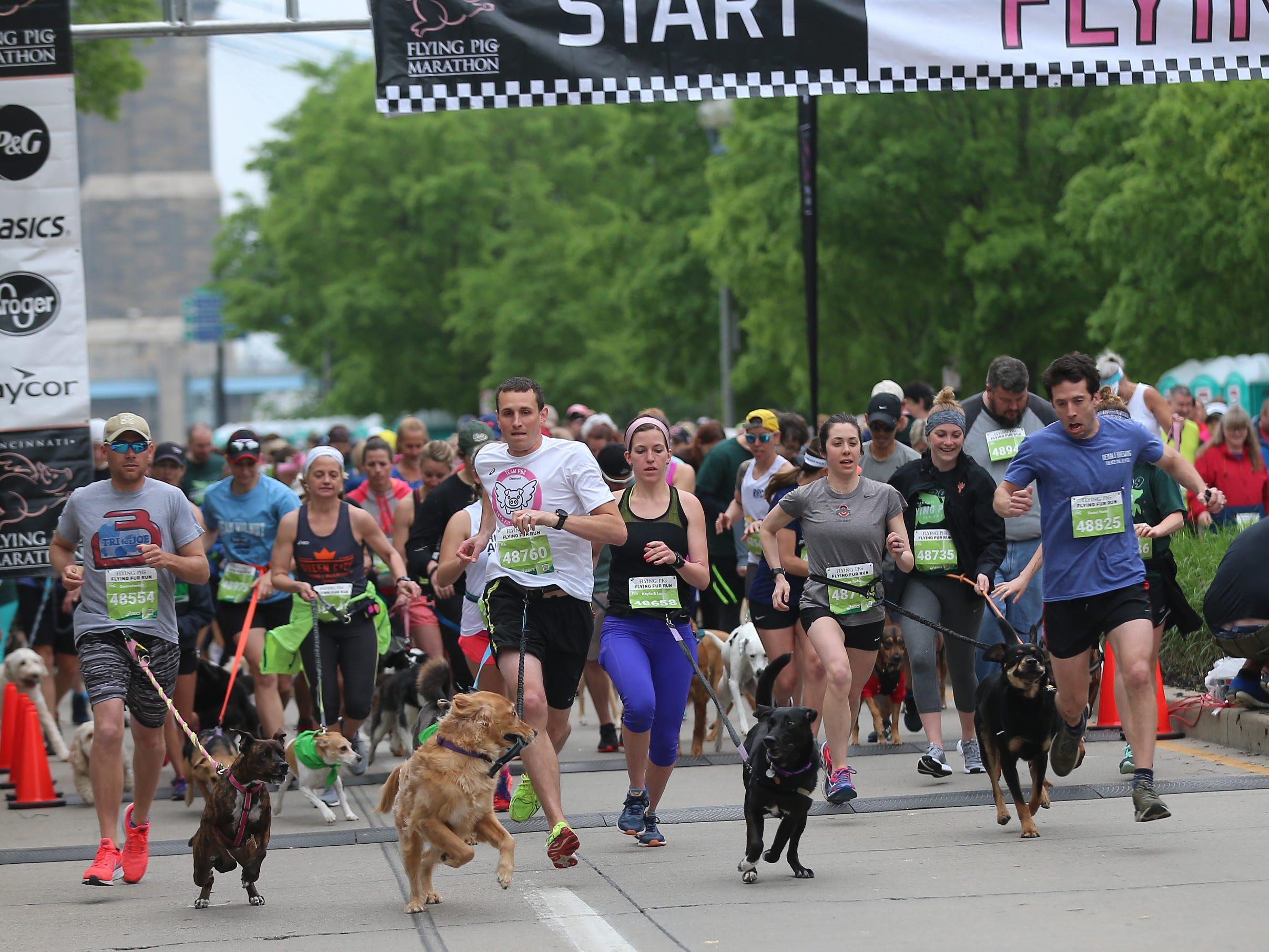 Begging of  the Flying Fur race, Downtown Cincinnati  Saturday , May 4,2019.