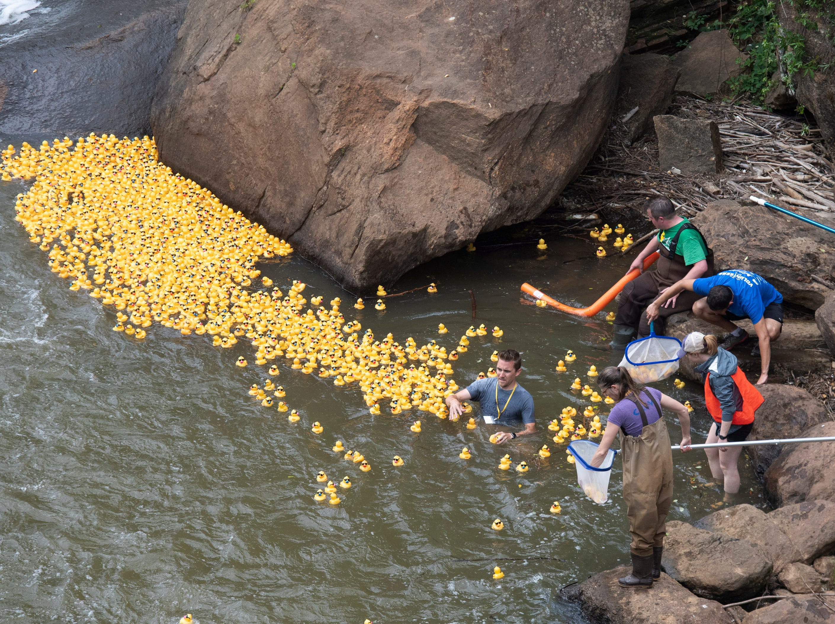 The 2019 Reedy River Duck Derby in Falls Park on the Reedy Saturday, May 4, 2019.