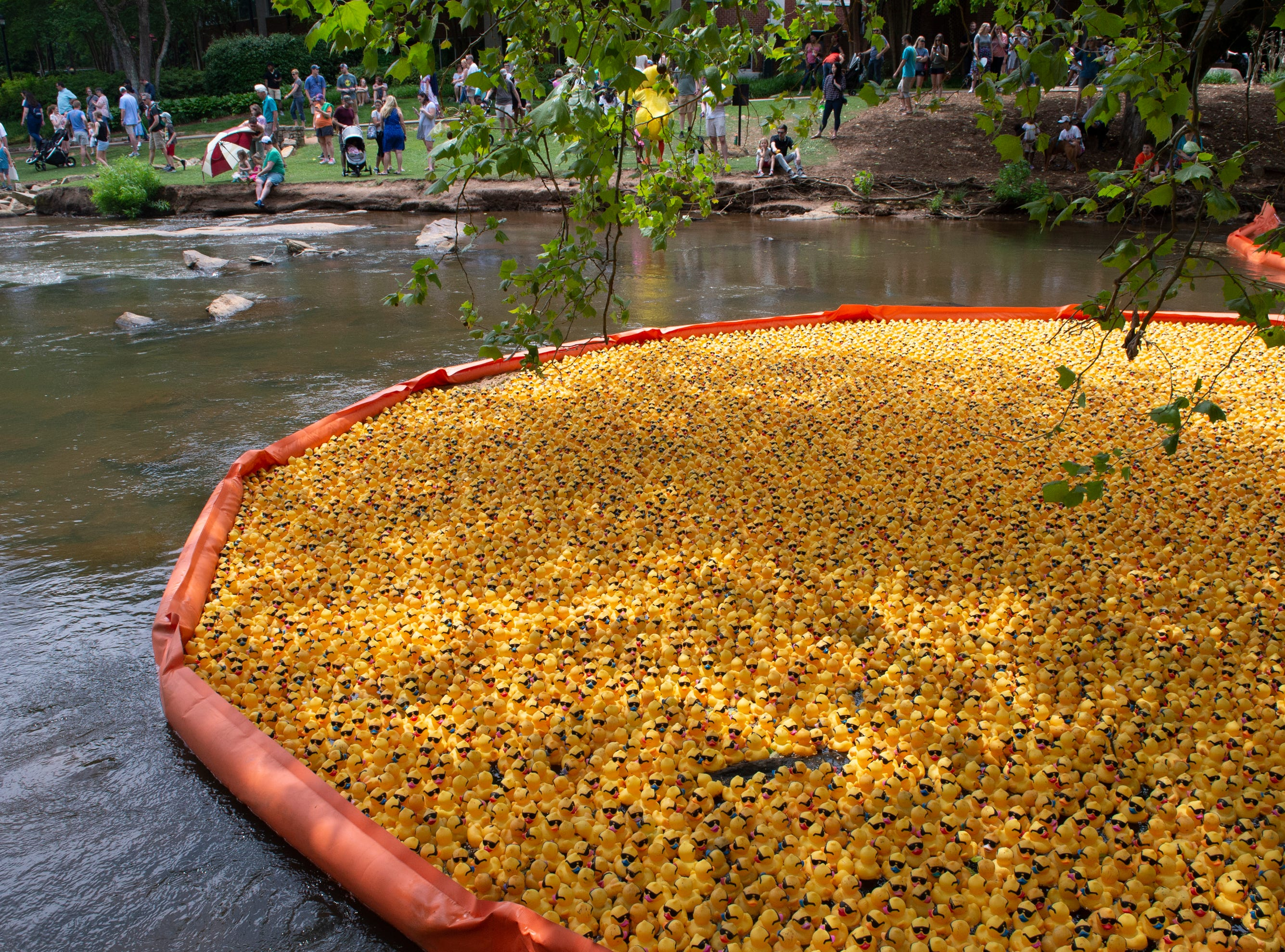 People gather near the start of the 2019 Reedy River Duck Derby in Falls Park on the Reedy Saturday, May 4, 2019.
