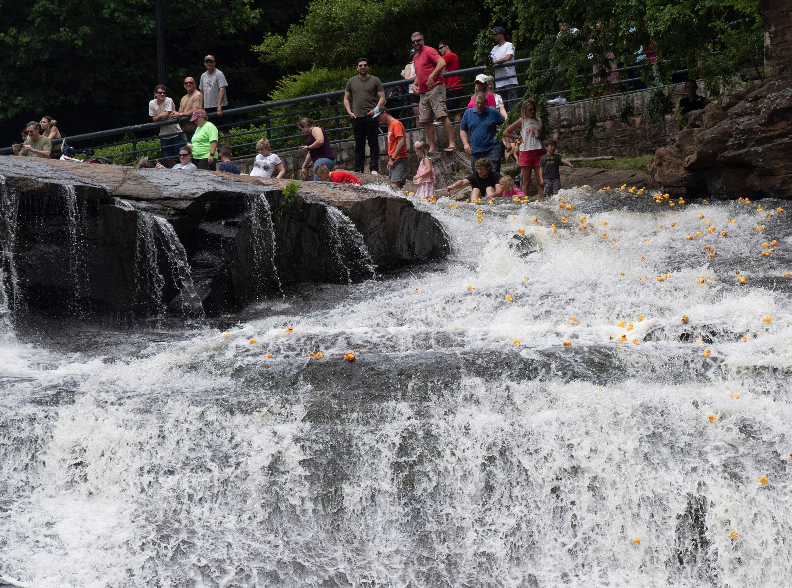 People watch as rubber ducks travel down the falls during the 2019 Reedy River Duck Derby in Falls Park on the Reedy Saturday, May 4, 2019.