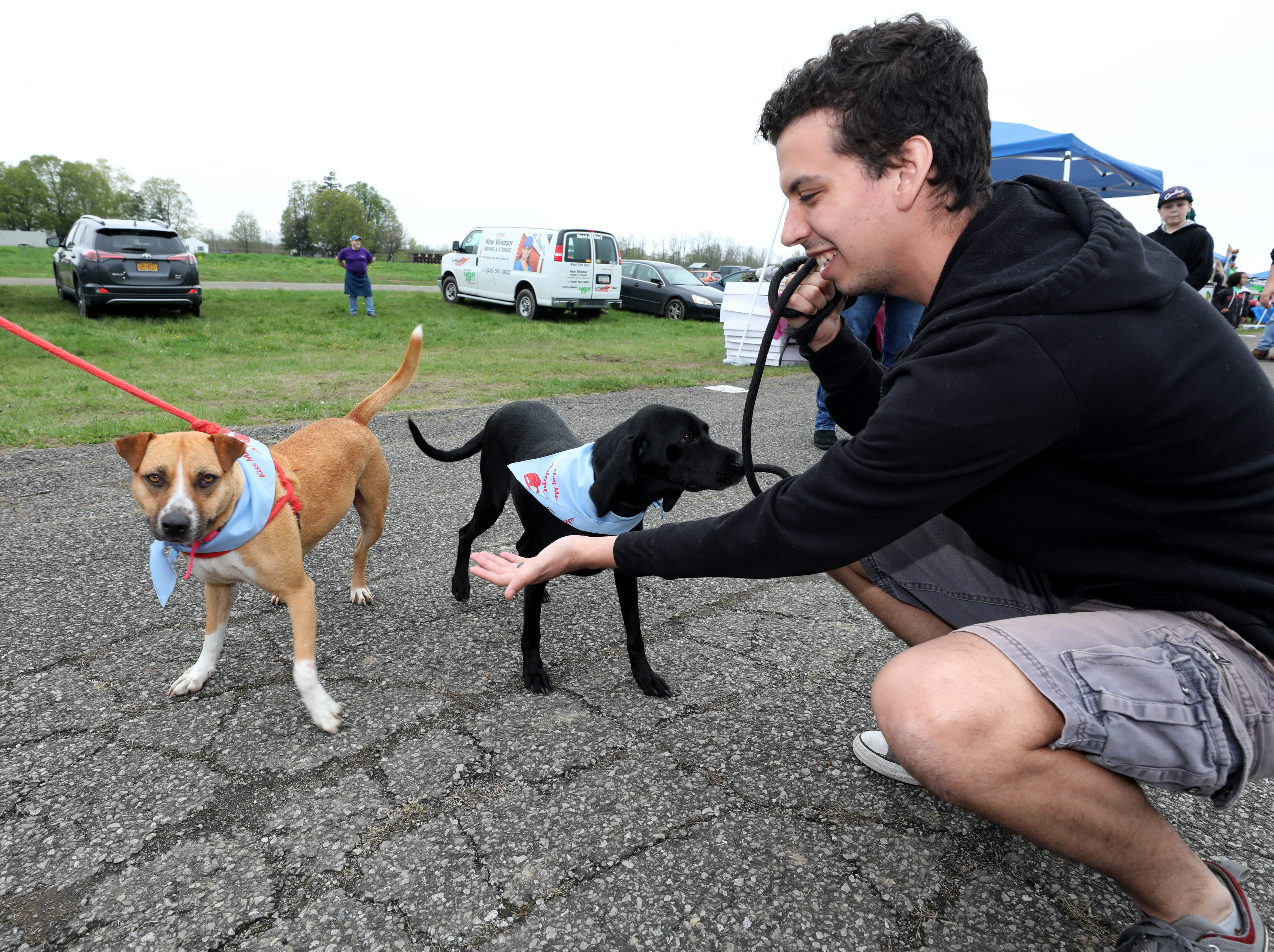 Animals with the Hudson Valley Animal Rescue and Sanctuary booth get some exercise during the K104.7 Cupcake Festival at the Stormville Airport, May 4, 2019.