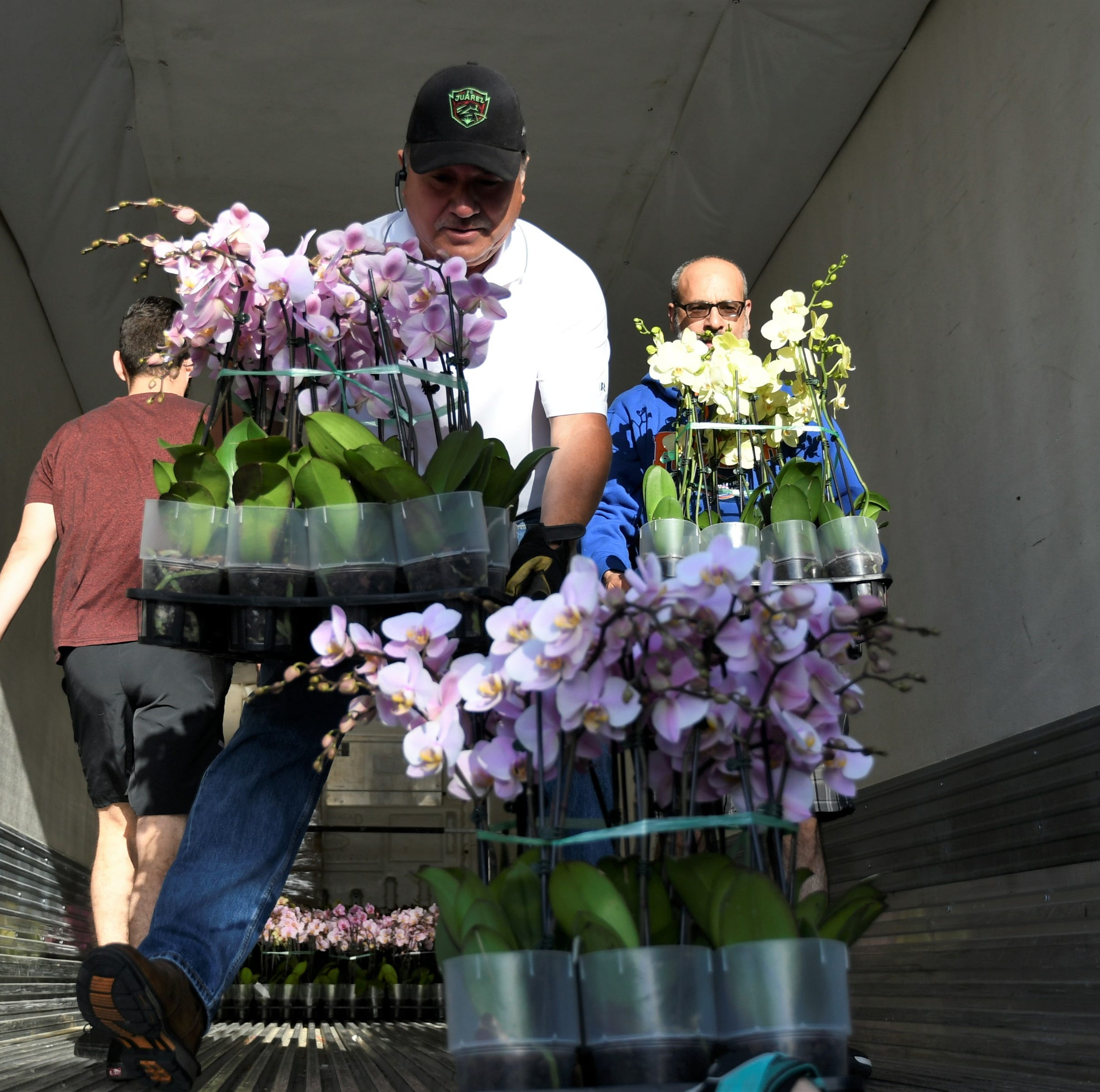 Hundreds of colorful orchids for sale at Arts Visalia, but you'll need to hurry
