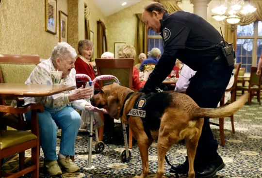 Country Meadows resident Mary Annette Knitter, 84, greets Lou the bloodhound after he tracked her scent, guided by Sgt. Sam Shipley of the York County Sheriff's Office, during a training exercise Thursday, Jan. 12, 2016, at Country Meadows of York in West Manchester Township. Bloodhounds from Summit Search & Rescue as well as from the York County Sheriff's Office practiced tracking residents who volunteered to hide in various areas of the retirement community's campus.