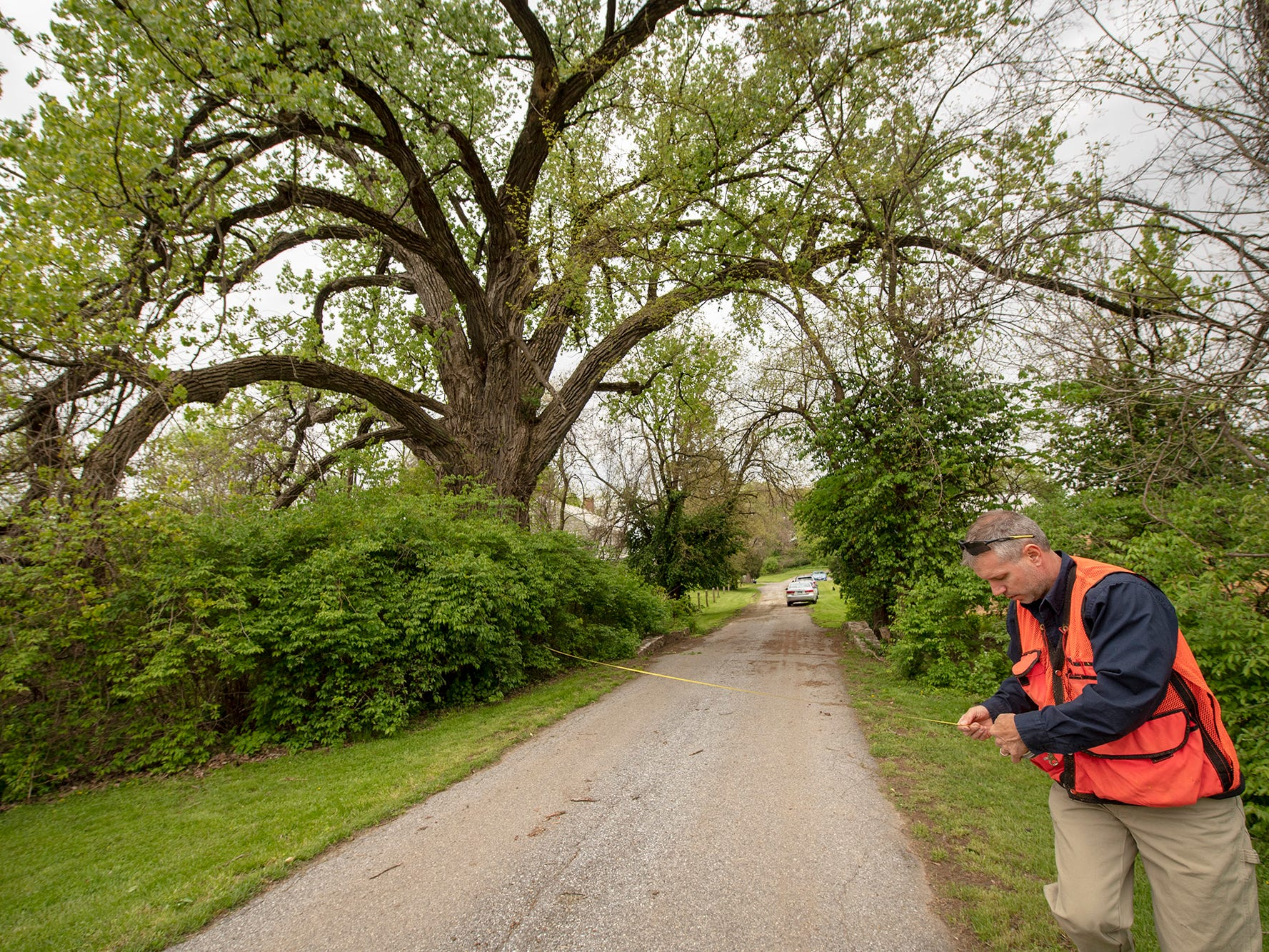 Matt Kern, a forester with the state department of conservation and natural resources, stands at the base of the largest tree in York County and one of largest Cottonwood trees in the state at Magnesita Refractory Co. in West Manchester Township.