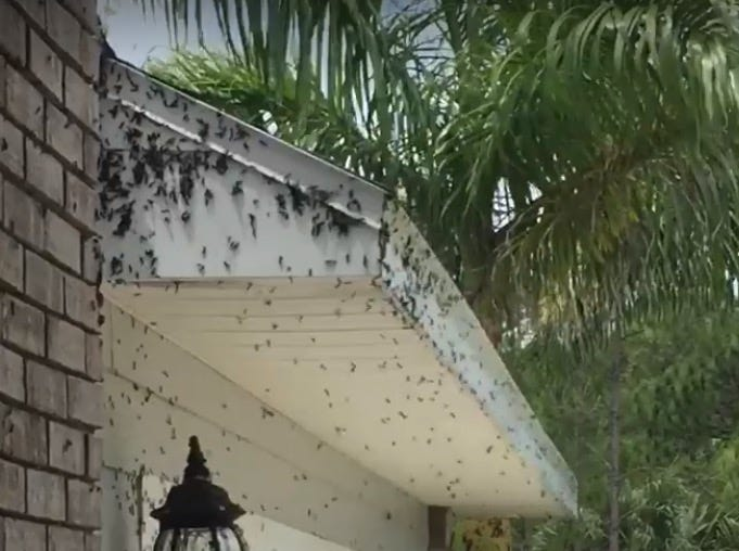 Ashley Howell's house in Melbourne was covered in lovebugs Sunday.