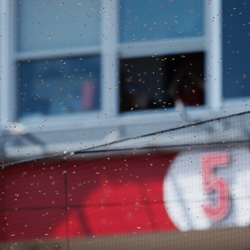 Cincinnati Reds pull players off field after bees swarm diamond seats area