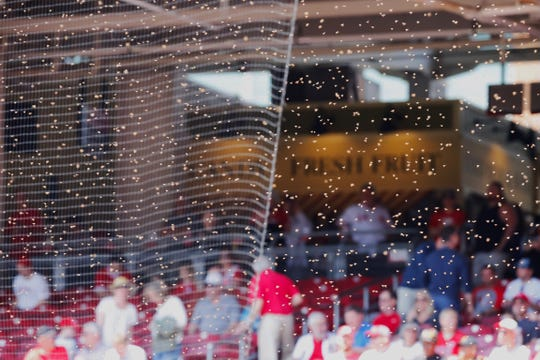 The Cincinnati Reds pulled the players off the field when bees swarmed the netting by the Diamond Seats.
