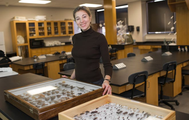 Amy Wright with an array of bugs, which may or may not be edible, at Austin Peay State University.