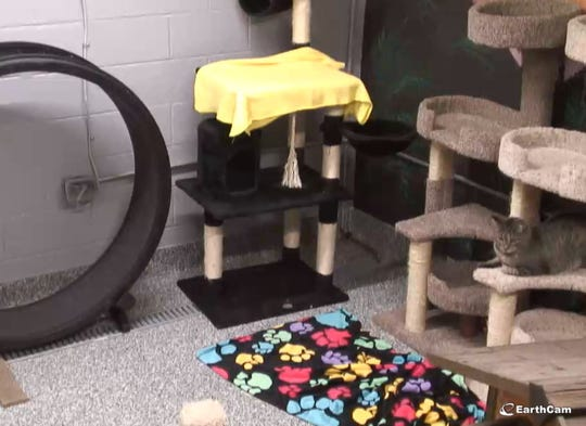 Macomb County Animal Control's new kitty cam.