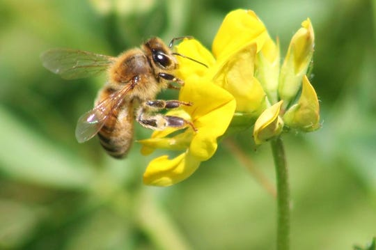The National Pollinator Garden Network wants to build on its Million Pollinator Garden Network. Register your own garden or create one that helps pollinators such as bees.