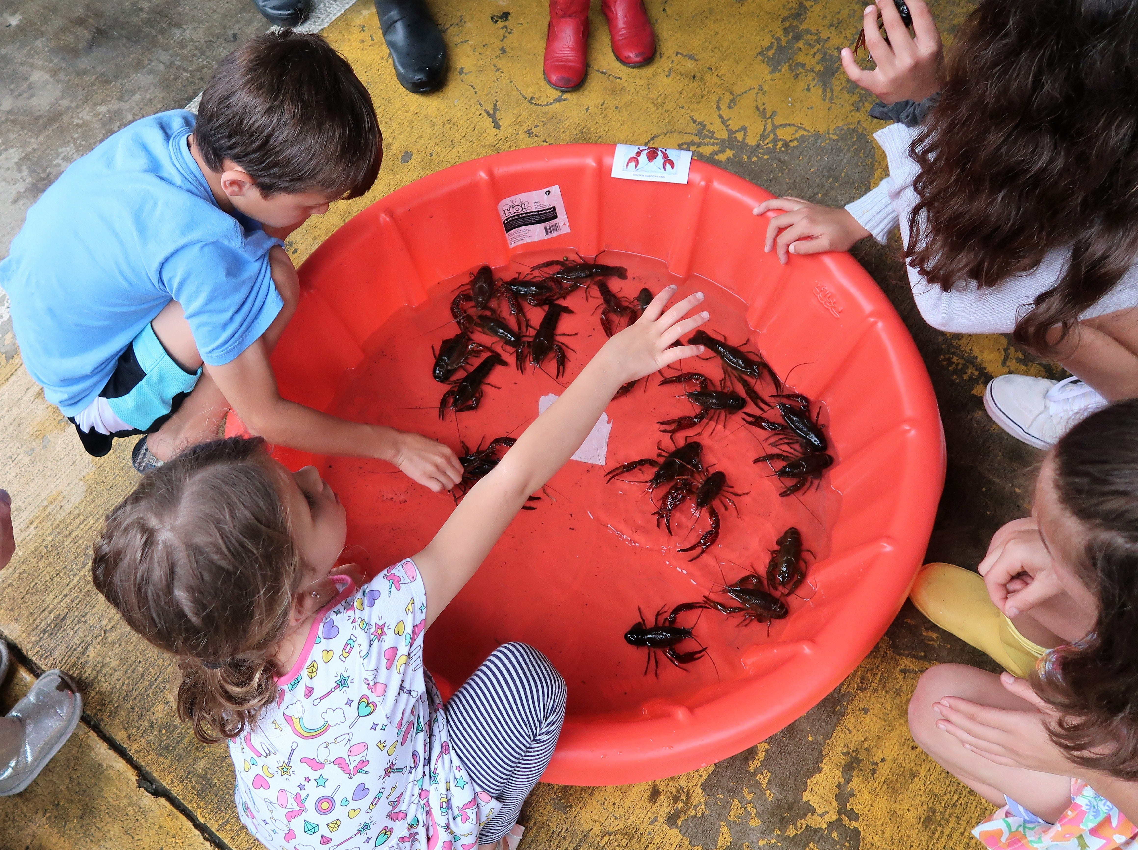 Children observe and play with a small pool of crawfish at the Second Annual Crawfest fundraiser for the Scarlet Rope Project at the West Tennessee Farmer's Market in Jackson on May 4, 2019.